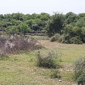 20 Kanal Agriculture Land For Sale in Moza Hattar