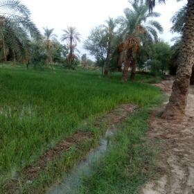 Agricultural Land for Sale in DG Khan
