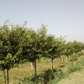 Farm House for Sale at Domeli near Dina, Distt. Jhelum (only 14 km from main GT road)